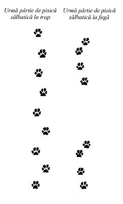 urme-pisica